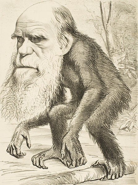 A cartoon of Darwin as an Ape, his theories on evolution were controversal when he was alive. (Wikimedia